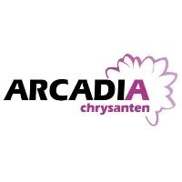 Arcadia Chrysanten Netherlands logo
