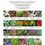 View 'Green Oasis Garden' plant list