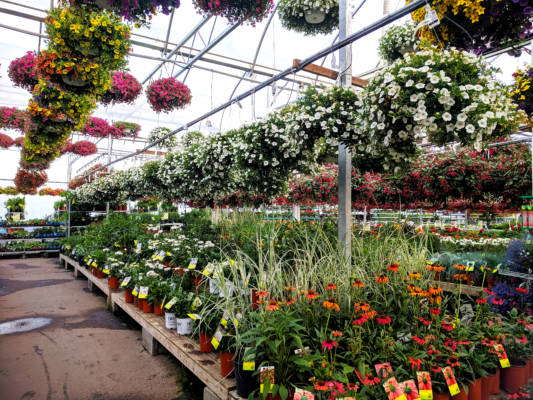 Ornamentals Production