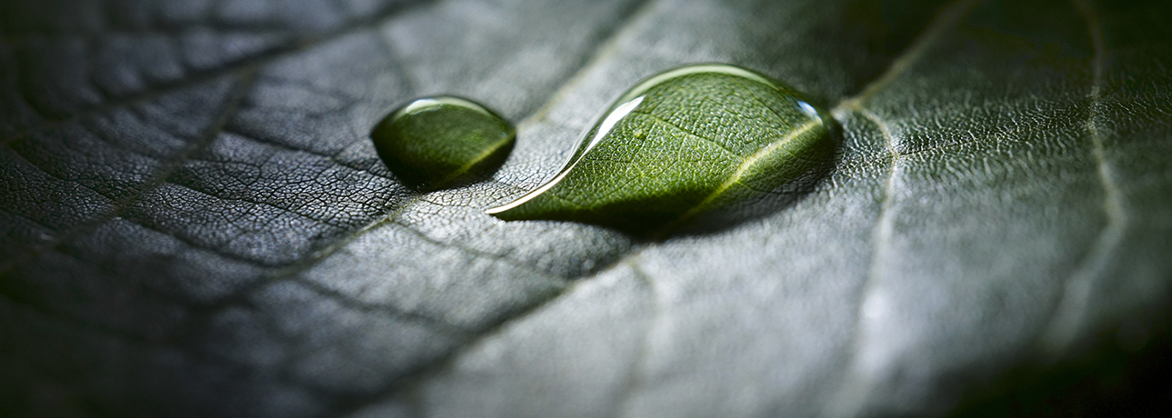 Water droplet on a green leaf