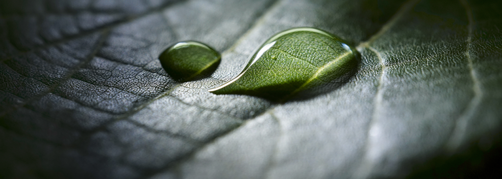 This image has an empty alt attribute; its file name is Plant-health-slider-1024x365.png