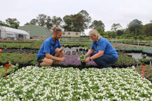 Camerons Nursery owner Sonja Cameron and Brad Brown from, Arcadia, NSW