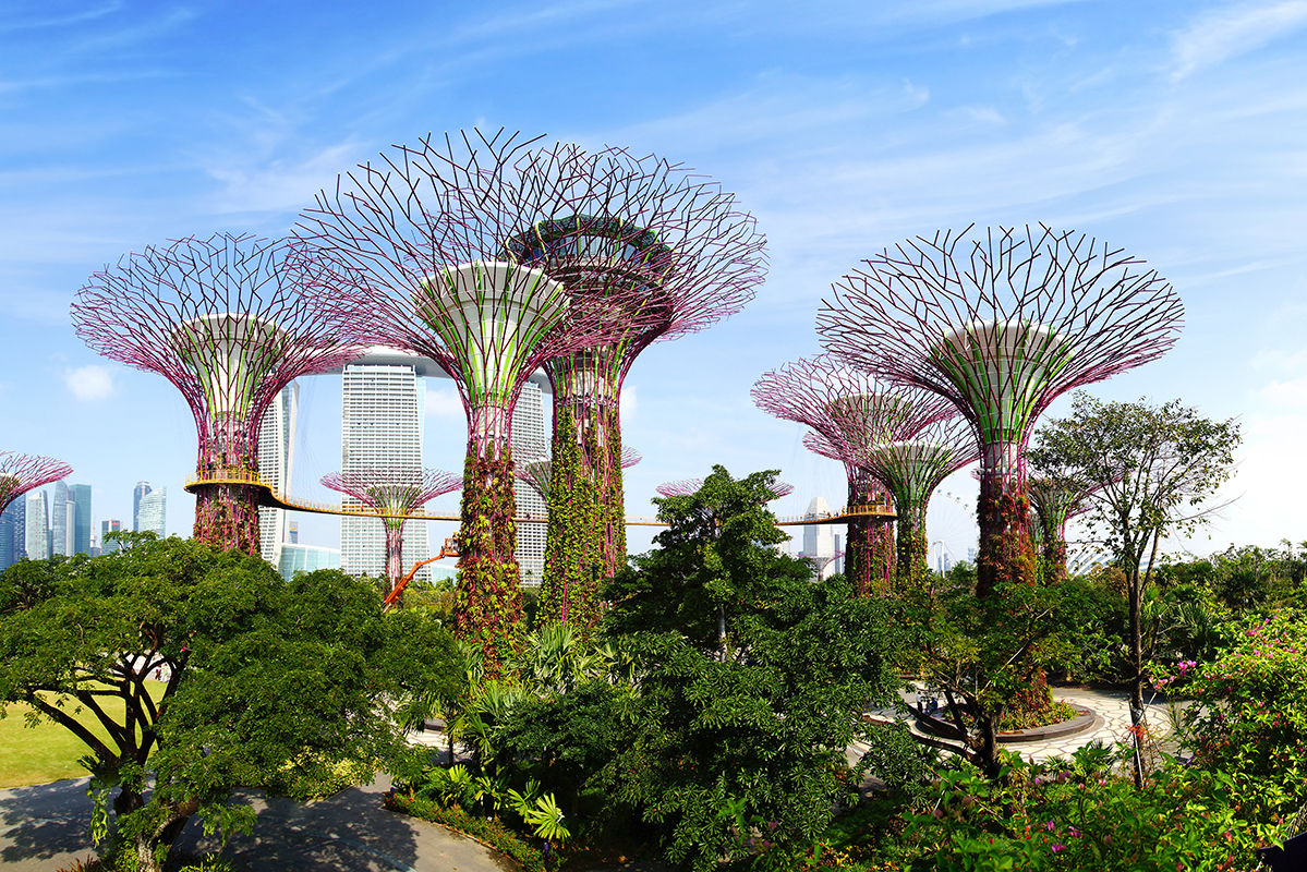 The Supertree Grove at Gardens by the Bay.