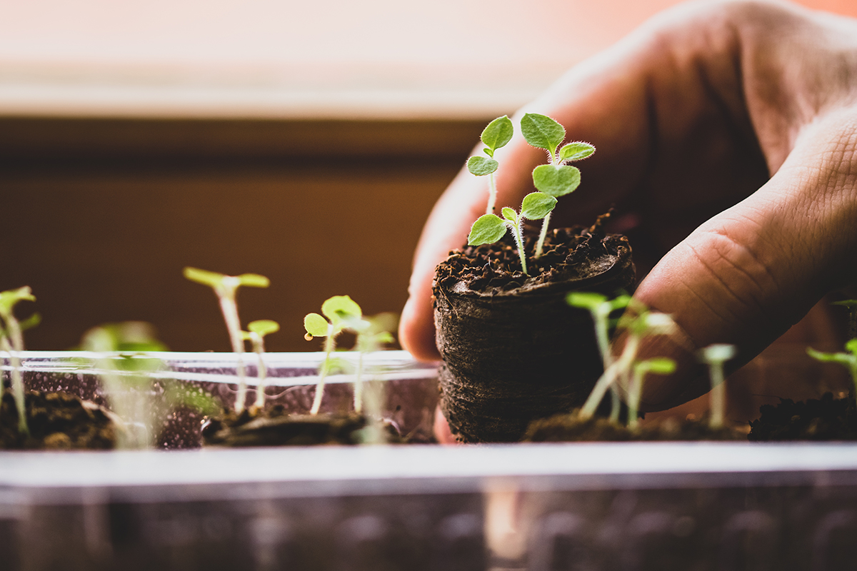 Person holding seedling